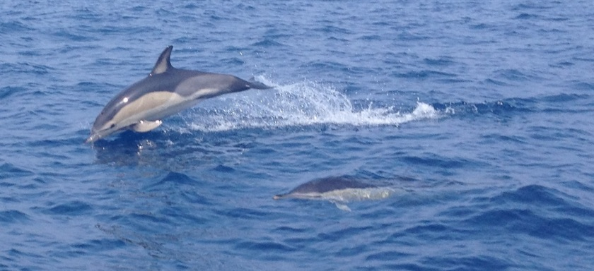 biscay_dolphins_1