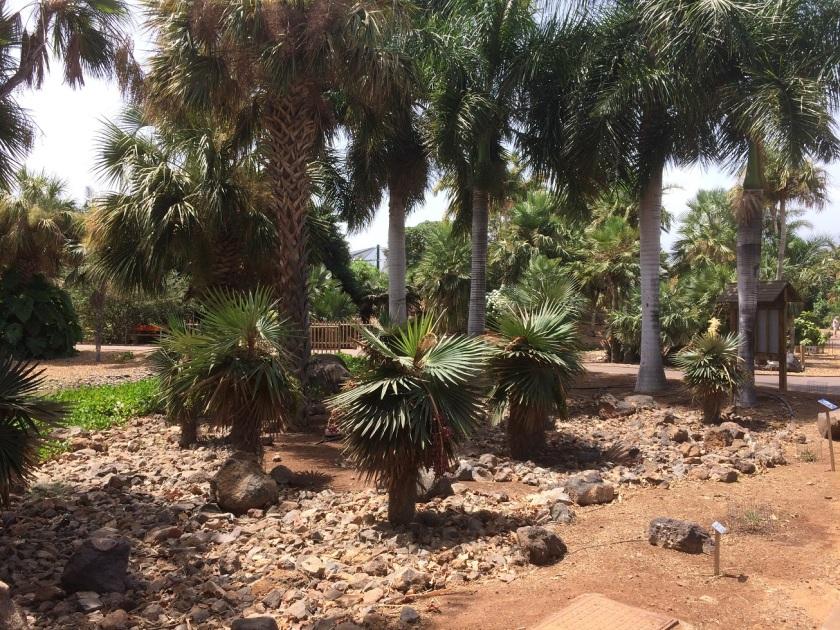 IMG_1106_Palmetum