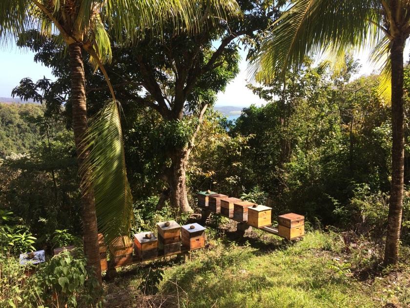IMG_3048_MTQ_Beehives