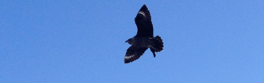 IMG_3857_XA2_Bird3