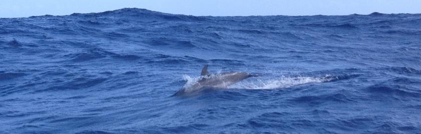 IMG_3898_XA2_Dolphin1