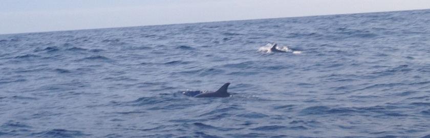 IMG_3906_XA2_Dolphin2