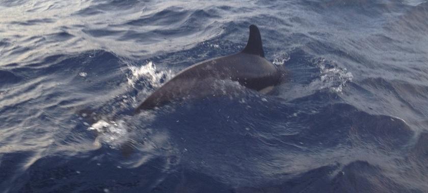 IMG_3908_XA2_Dolphin3