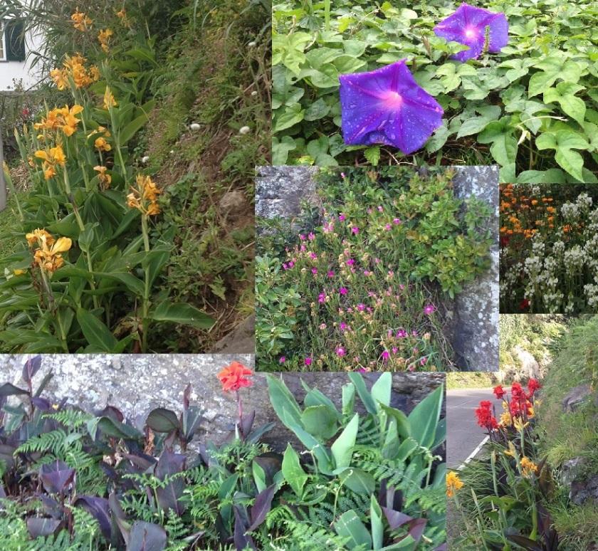 Flores_Flowers