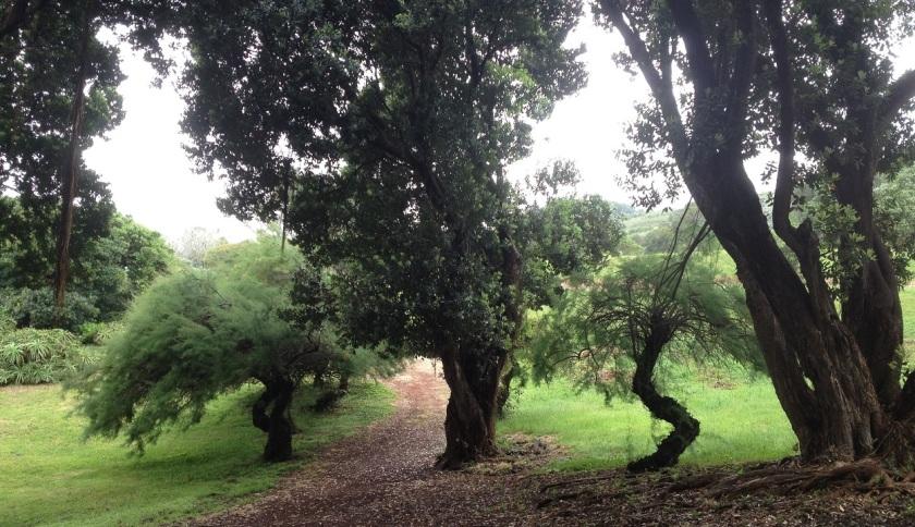 IMG_4177_Horta_Arboretum